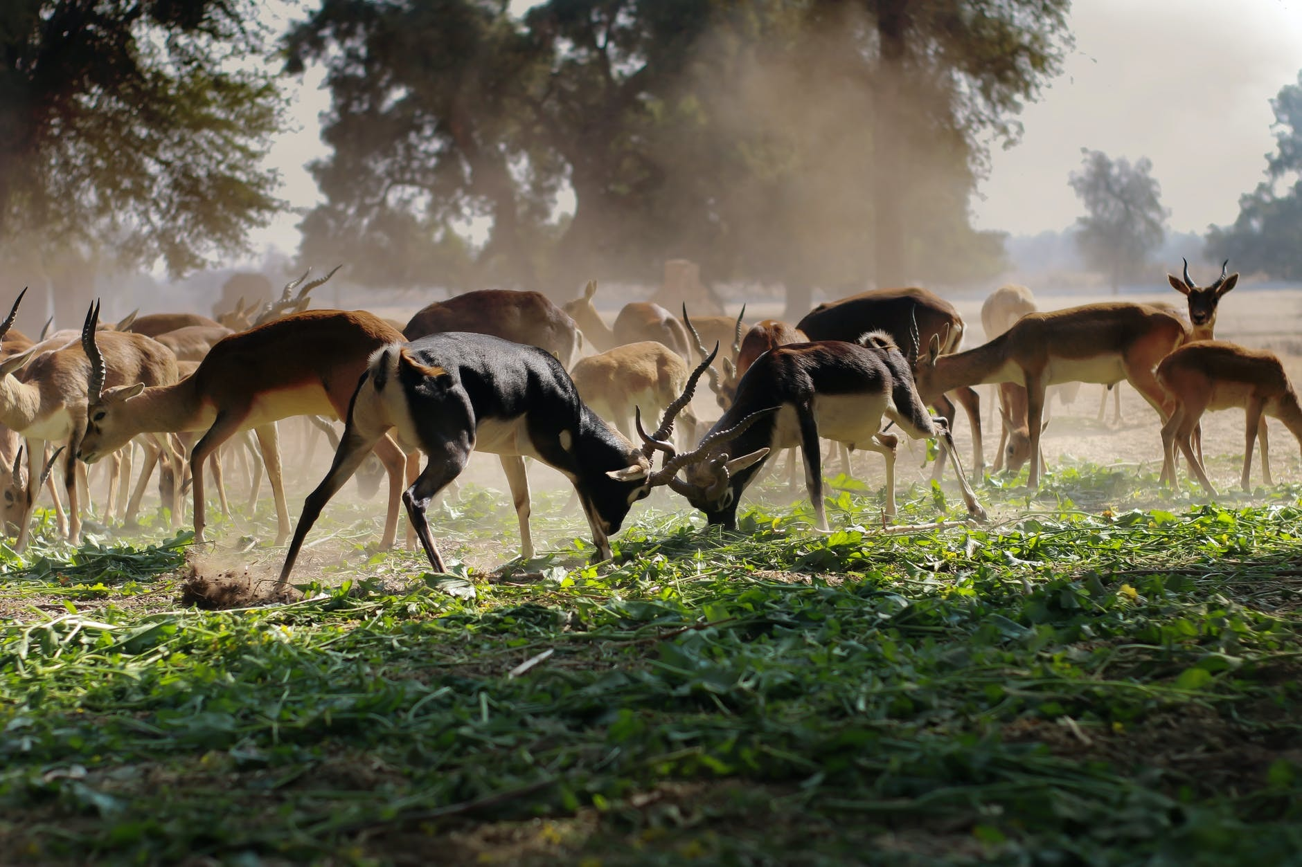 Best Time Of Day To Hunt Deer [All You Need to Know]