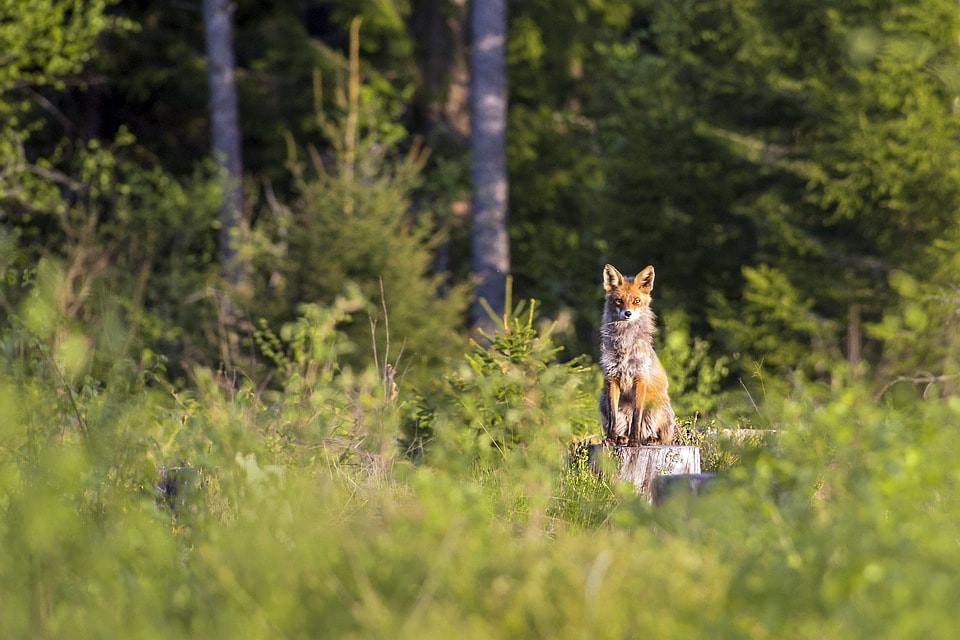 What Group Sets Hunting Regulations