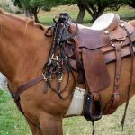 Top 3 Best Barrel Saddles Reviews | Comfortable for Your Horse